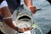 Pesca report e catture