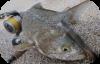 Pesci e tecniche di pesca.