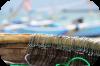 Palamito o coffa Tecnica maggiormente praticata dai pescatori di professione