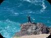 Pesca rockfishing