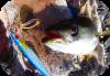 Pesca shore jigging