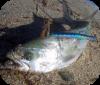 Pesca a spinning pesca con esca artifigiale