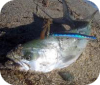 Pesca spinning