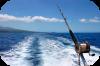 Pesca dalla barca Traina di superficie Traina di profondità - Traina d'altura