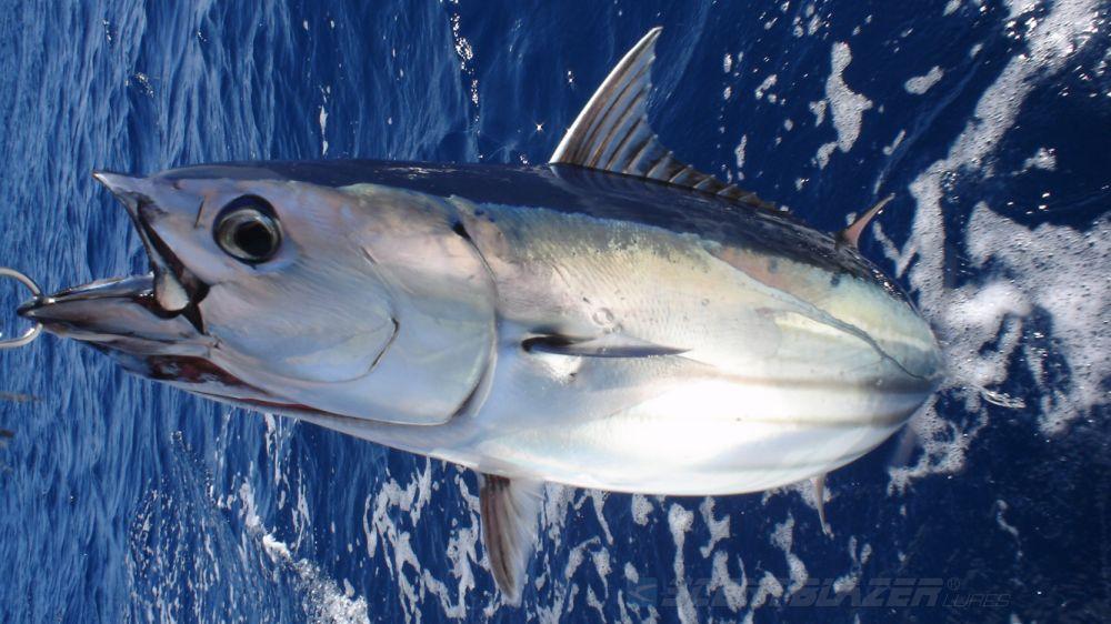 tonno-pesca