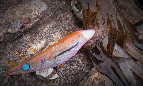 light-eging-naory-fishing