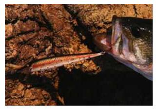 Pesca artificiale lago fime sila spinning