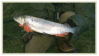 pesca in sila lago cecita pescare in calabria