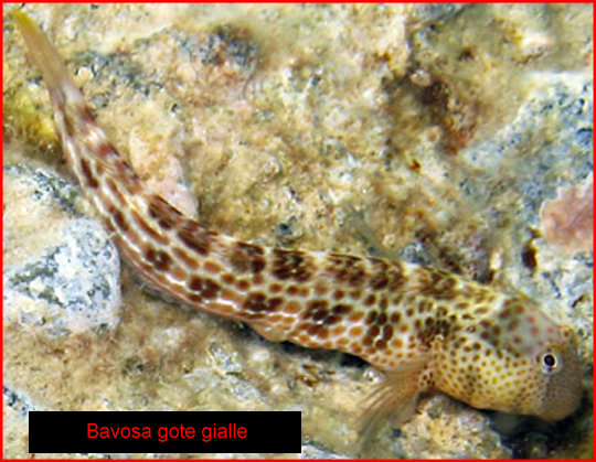 Calabria pesca online immagini dei pesci d 39 italia for Pesci online