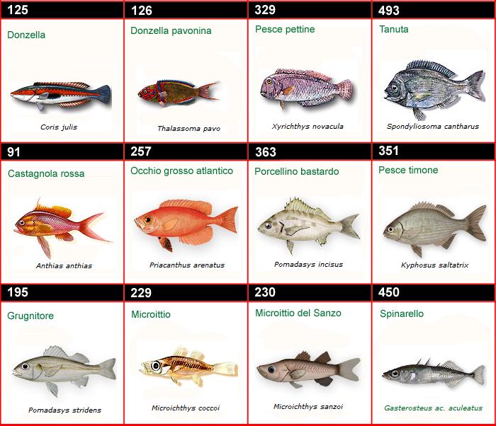 Calabria pesca online immagini dei pesci d 39 italia - Pesci comuni in tavola ...